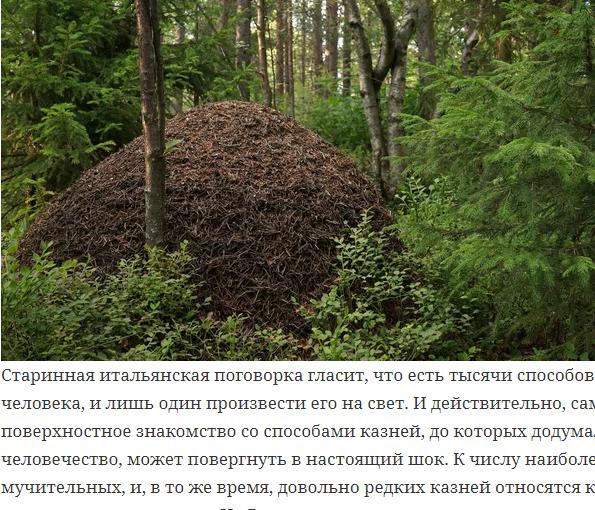 За что на Руси сажали на муравейник