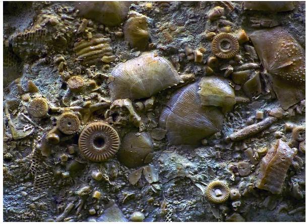На Камчатке нашли деталь возрастом … 400 миллионов лет